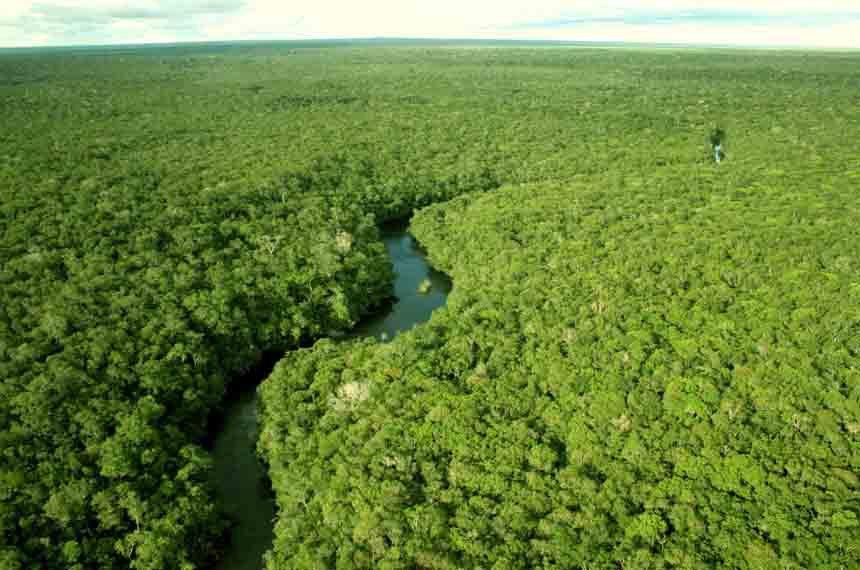 Com milhões de espécies vegetais, muitas das quais ainda não catalogadas pela ciência, a floresta amazônica é a maior fonte de recursos da biodiversidade no Brasil