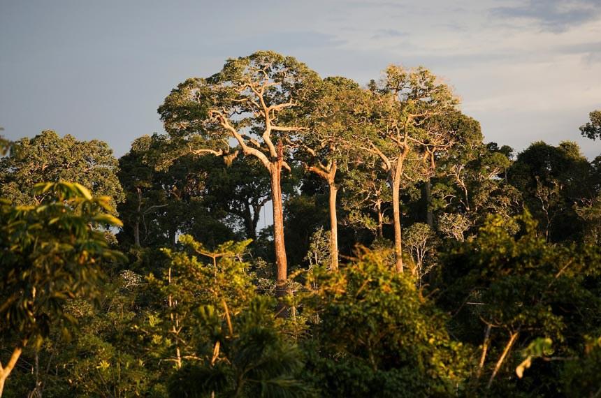 Brasil almeja reduzir em 37% a emissão de gases de efeito estufa até 2025 - Ubirajara Machado/MDA