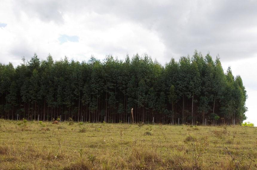 Espécies exóticas como o eucalipto utilizadas em florestas plantadas desertificam o clima, alertou o relator, Otto Alencar
