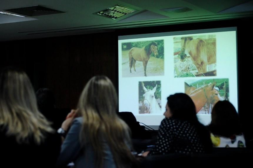O mormo é uma doença típica de equinos, mas pode contaminar humanos