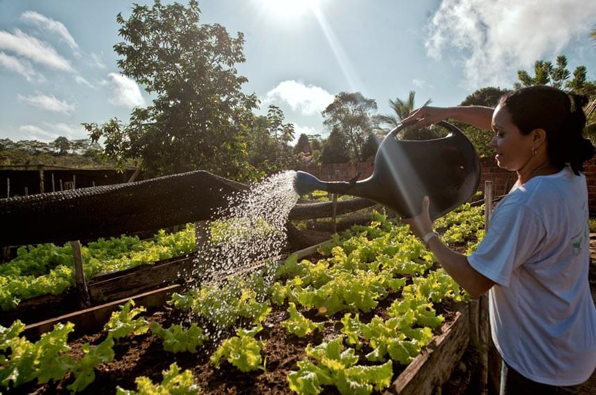 PRONATEC, Curso de Olericultura. Francisca Artemisia Nascimento Melo aprendeu técnicas de manejo e sua horta de subsistência viror um empreendimento que a transformou em produtora rural. Seus produtos agora são orgânicos e a qualidade dos alimentos melhorou.