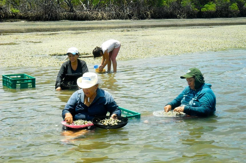 Marisqueiras apoiadas pela Codevasf comemoram melhoria das condições de trabalho no Piauí  Créditos : Divulgaçao/Codevasf