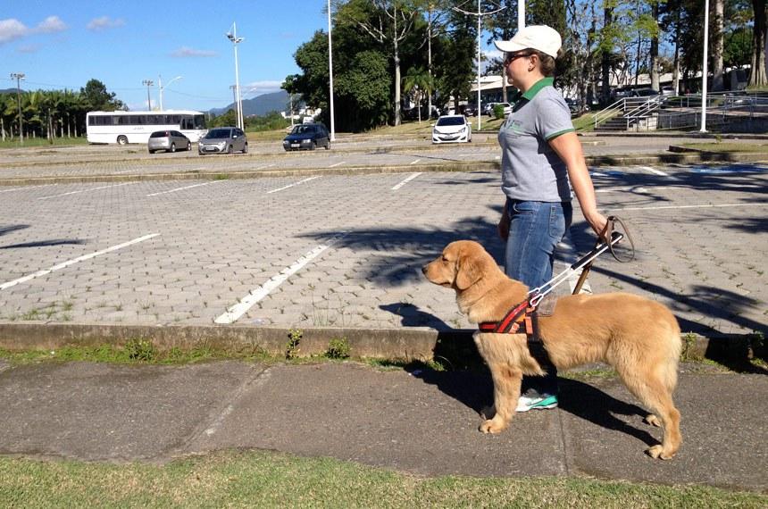 Treinamento de cão guia no IFC (Instituto Federal Catarinense)