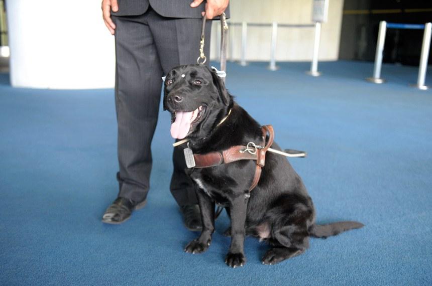 Semana de Comemoração – Dia Internacional da Pessoa com Deficiência  Projeto cão-guia de cegos – Visita a diversos espaços do Senado Federal