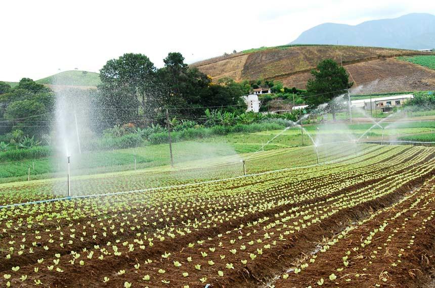 Irrigação convencional desperdício de água e ampliação do ambiente favorável às doenças no estado da Bahia.