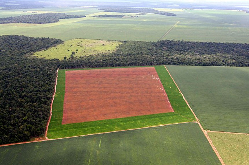 Plantação de soja em Sorriso, MT.   © Greenpeace / Alberto César Araújo