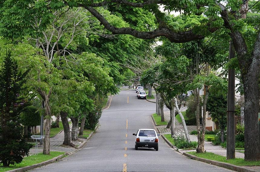 Prefeitura de Curitiba mantém cerca de 300 mil árvores localizadas em vias públicas. Mudanças climáticas têm atrapalhado na manutenção das espécies.  Foto: Jaelson Lucas/SMCS(arquivo)