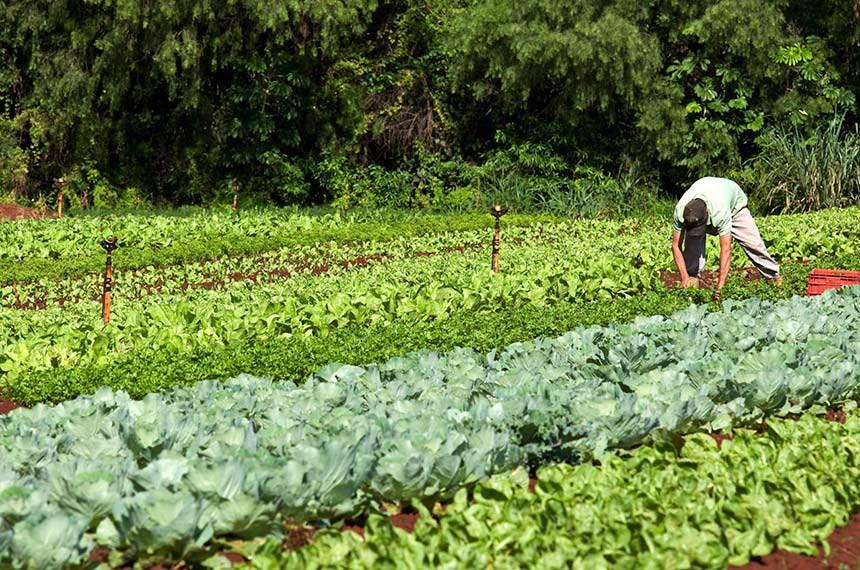 Alimentacao Escolar - Agricultor José Roberto Alves