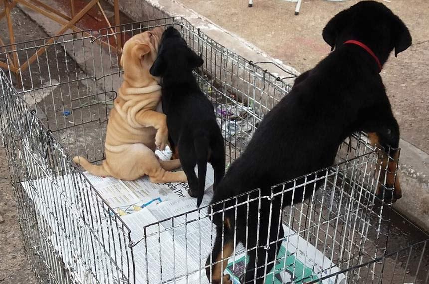 Na entrada da Feira dos Importados, no Setor de Indústria e Abastecimento (SIA), ambulantes mantêm um negócio ilegal de venda de animais.