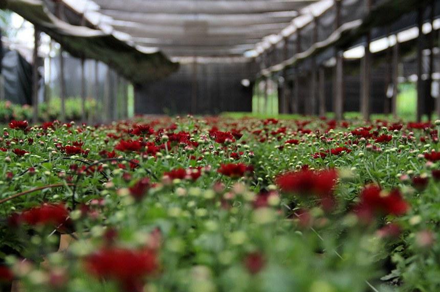 Produção de flores na zona Leste de Porto Velho, da Rondoflores, um dos maiores produtores de flores da região Norte do país, começa abastecer também o Acre e a Ceasa paulistana. Na foto: viveiro de plantas