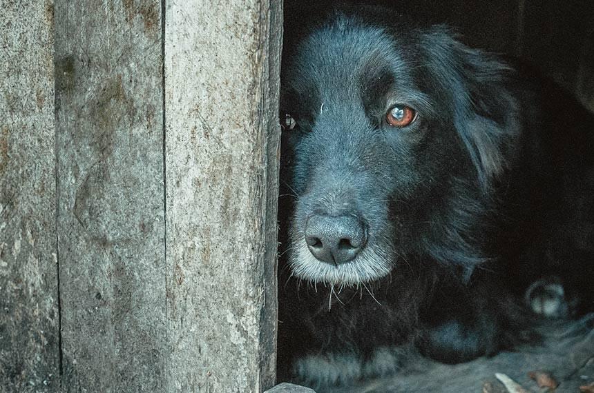Poor expelled dog waiting for its master. The shelter for animals.  Pobre cachorro expulso esperando por seu dono no abrigo para animais.