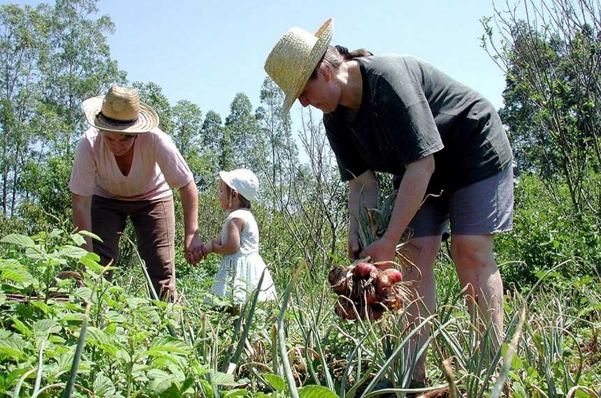 Plano Safra 2015/2016 para Agricultura Familiar destinará mais de R$ 28 bilhões de crédito ao produtor.