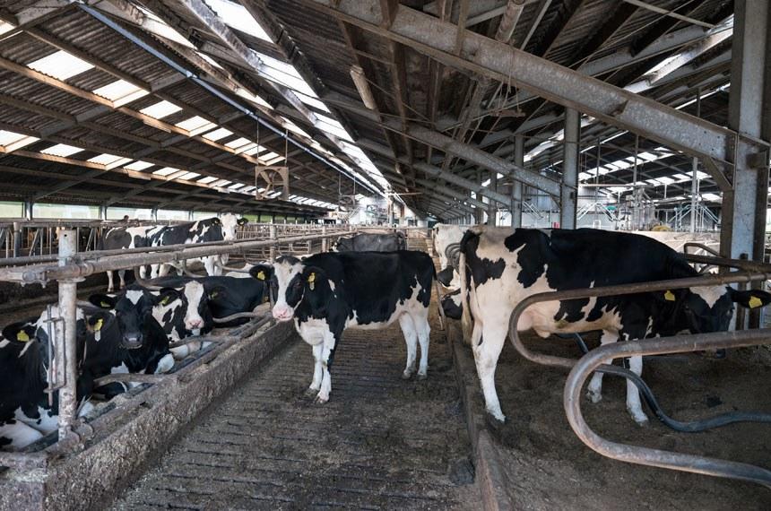 Produção de leite poderá ser isenta de IPI  Os insumos e equipamentos destinados à produção de leite poderão ser isentos do Imposto sobre Produtos Industrializados (IPI). É o que define o projeto do senador Alvaro Dias (Pode-PR) que tramita na Comissão de Agricultura e Reforma Agrária (CRA).  De acordo com o PL 575/2019, caberá ao Ministério da Agricultura discriminar os produtos cobertos pela isenção de IPI, que poderão abranger máquinas, instrumentos, peças de reposição, acessórios e matérias-primas. O objetivo do projeto é estimular a modernização da pecuária leiteira diante do aumento da demanda por investimento e eficiência.  Foto: Getty Images/iStockphoto