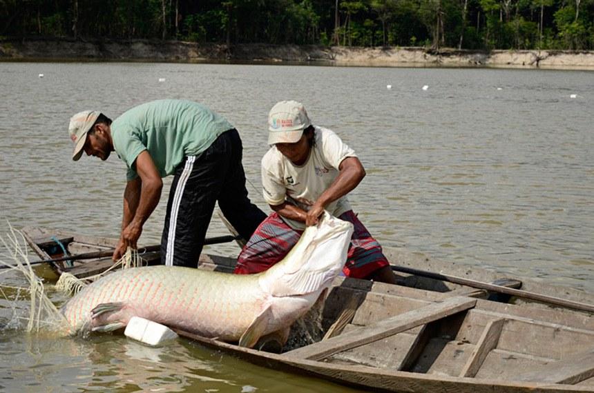 A proposta pode beneficiar os pescadores do pirarucu
