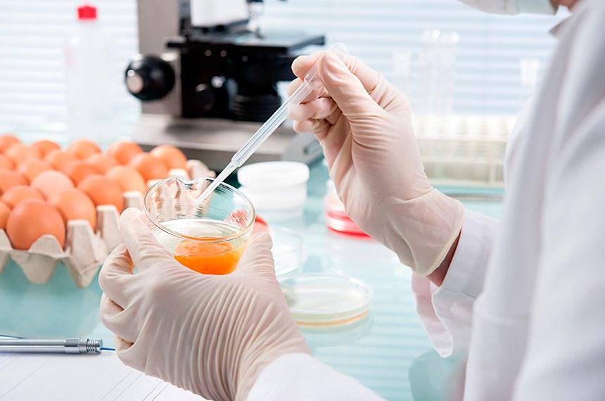 Quality Control Expert Inspecting At Chicken Eggs In The Laboratory  ------------  Expert em controle de qualidade faz inspeção em ovos de galinha no laboratório