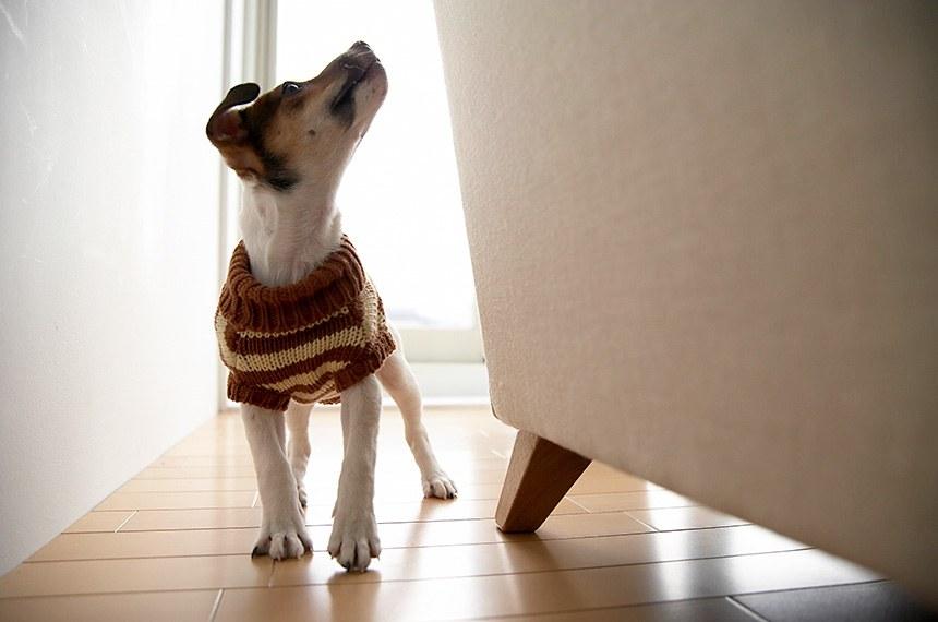 Pelo projeto, os proprietários devem seguir regulamento do condomínio e evitar que seus animais causem qualquer tipo de dano, incômodo ou risco à segurança dos vizinhos