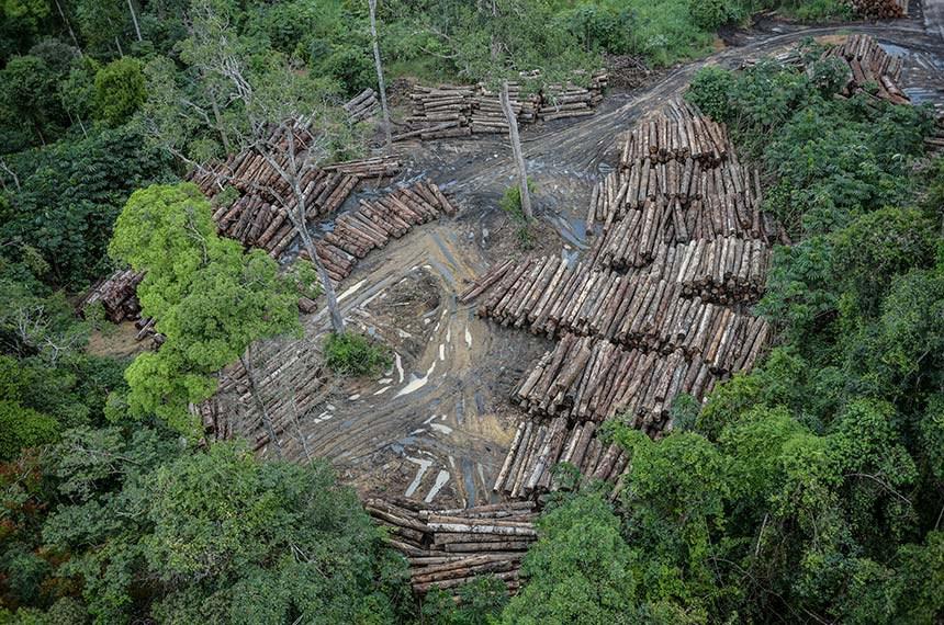 08.05.2018 Terra Indígena Pirititi, Roraima Ibama combate desmatamento ilegal na Terra Indígena Pirititi, Roraima     Foto: Felipe Werneck/Ibama