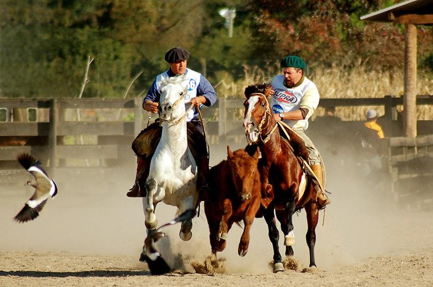 Rodeio de cavalo crioulo em Pelotas (RS)