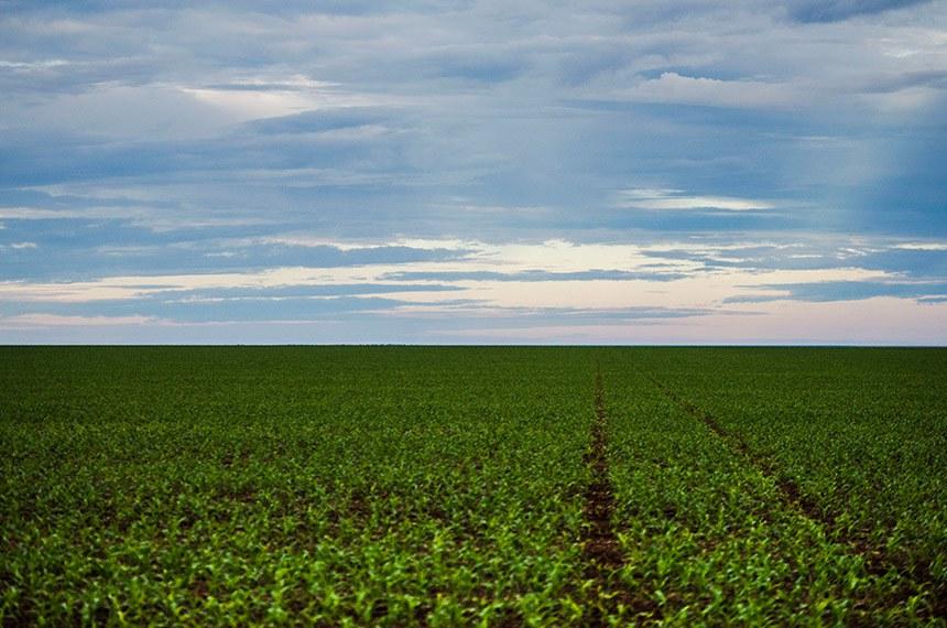 Área de plantação de soja próximo ao município de Brasnorte, noroeste do Mato Grosso.