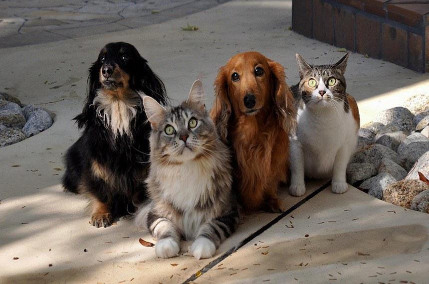 Nossos Bichos: Programa da Nacional de Brasília destaca universo dos pets.  Cães, gatos, aves, peixes.  Você escolhe o seu favorito. Os pets têm lugar cativo na vida e no coração dos brasileiros.  Foto: EBC
