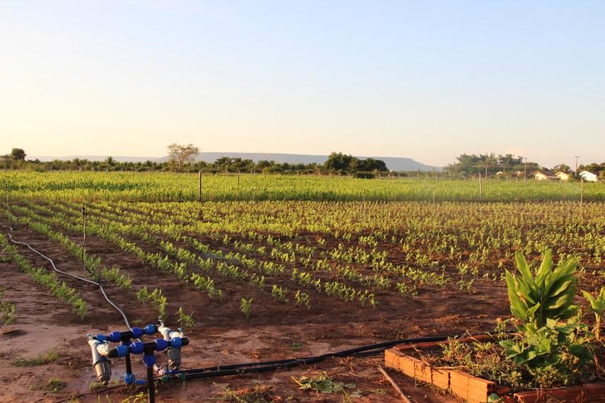 Pesquisadores mostram como a irrigação pode potencializar a agricultura familiar.