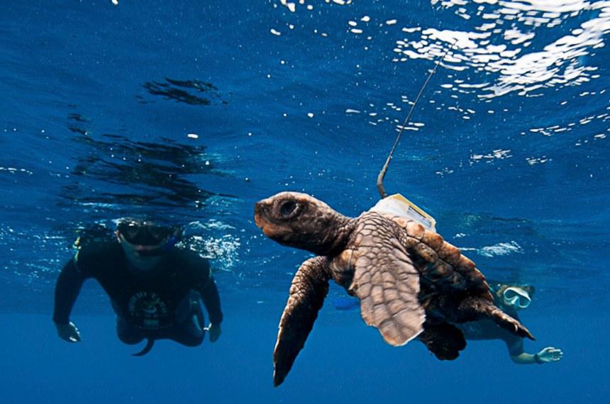 Bases do Centro Tamar, de preservação de tartarugas, foram fechadas em Camaçari (BA), Parnamirim (RN) e Pirambu (SE)