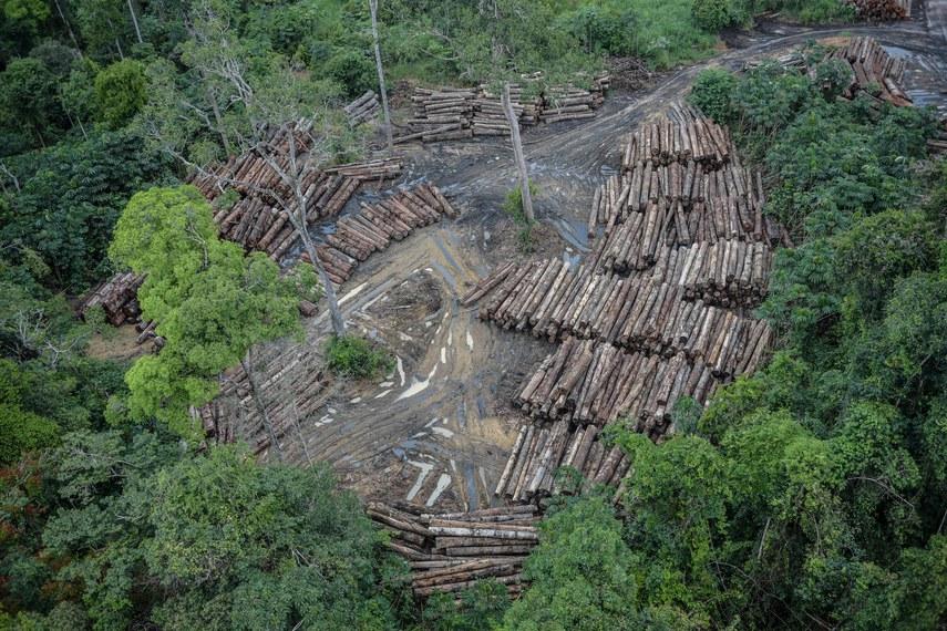 Segundo o primeiro Relatório Anual do Desmatamento, do  MapBiomas, o Brasil perdeu mais de 1,2 milhão de hectares de vegetação nativa em 2019