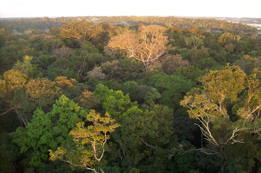 Floresta Amazônica  O Programa de Pesquisas Ecológicas de Longa Duração (PELD) representa uma iniciativa pioneira no que diz respeito à obtenção de informações sobre aspectos fundamentais para a Conservação da Biodiversidade e Uso Sustentável dos Recursos Naturais dos ecossistemas brasileiros.