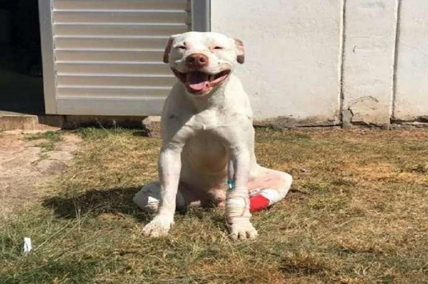 Sansão, cachorro que teve as patas decepadas em Minas Gerais volta pra casa