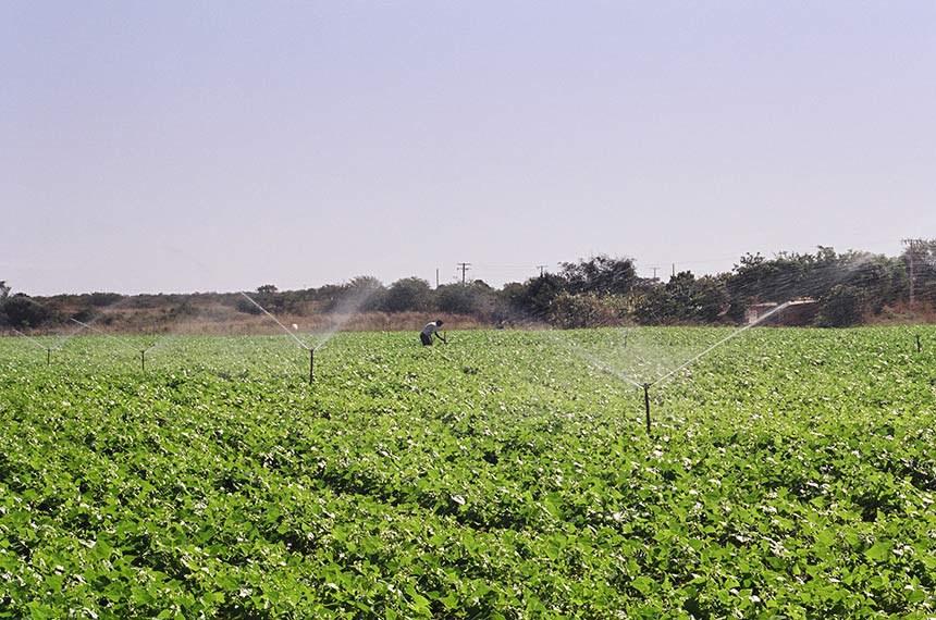 Projeto de Irrigação Codevasf em municípios de Minas Gerais. Fotos do Perímetro Jaíba e Gorutuba.
