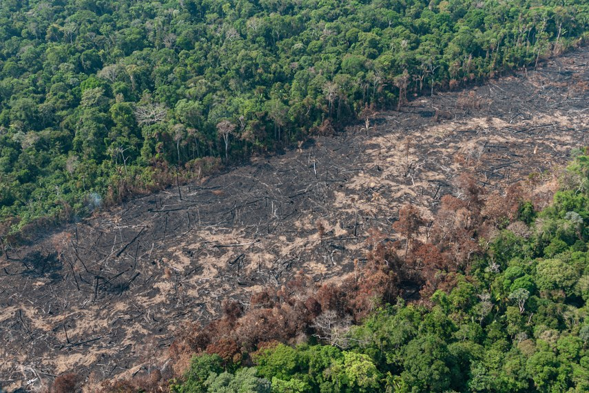 Dados do Inpe apontam que a área desflorestada na Amazônia aumentou 9,5% entre agosto de 2019 e julho de 2020