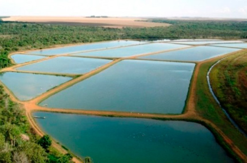 """Para o autor do projeto, senador Zequinha Marinho, práticas como a da piscicultura são de grande importância e ainda sofrem com """"excessiva carga tributária e entraves burocráticos"""""""