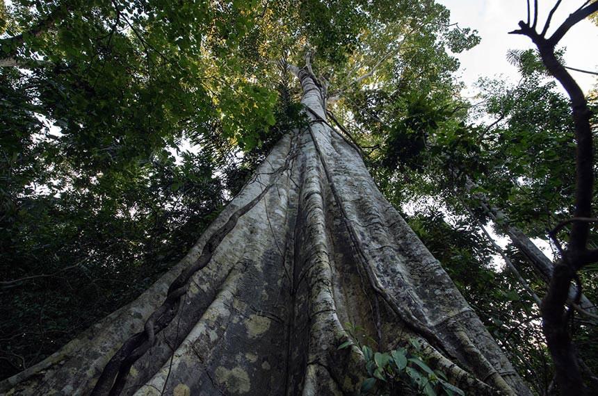 2º Encontro Etnoambiental da Frente de Proteção Uru Eu Wau Wau - Bananeiras