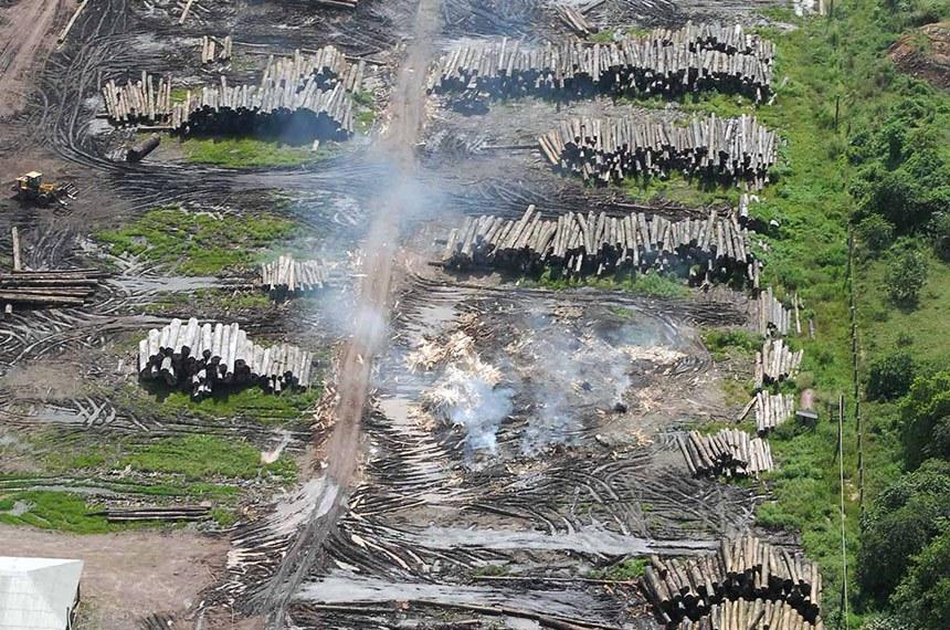 Vista aérea de madeiras cortadas na Amazônia, durante operação da Polícia Federal na cidade de Tailândia (PA).