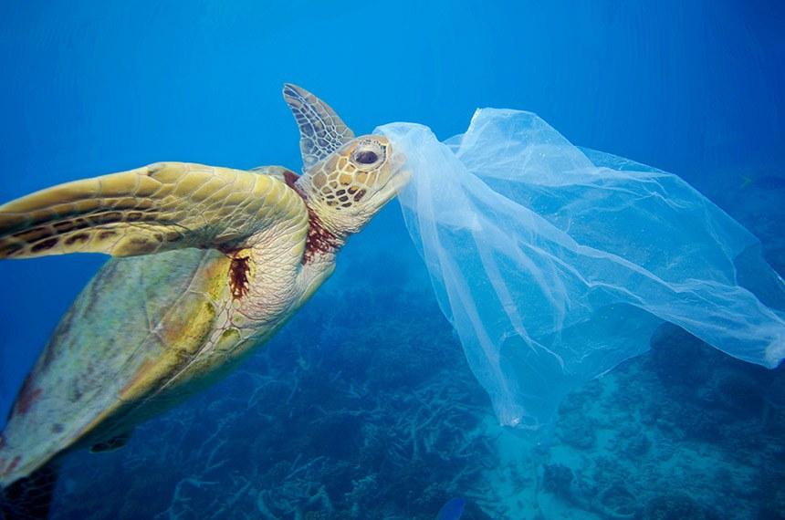 Tartaruga Marinha envolvida em sacola plática na Austrália. A sacola foi removida pelo fotógrafo antes que a tartaruga tivesse a chamce de comê-la.