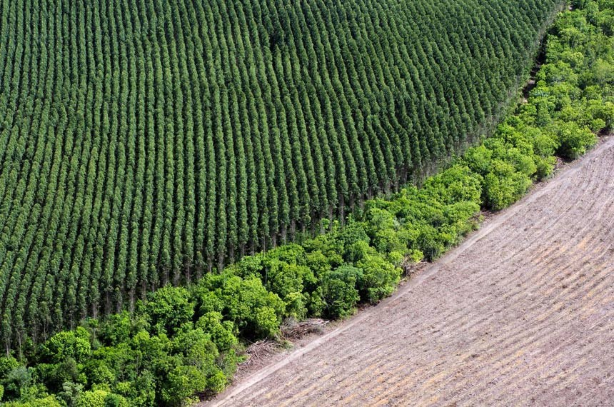 Uma faixa de floresta separa uma plantação de eucalipto de uma área desmatada, 60km ao norte de Macapá.