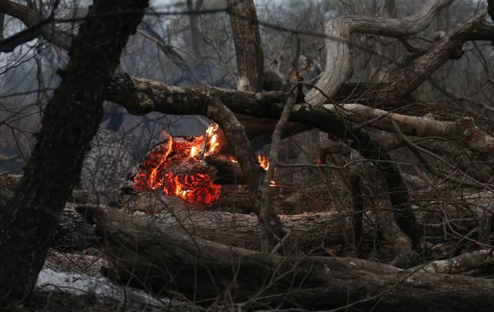 Cuiabá-19-09-2020 Comissão de senadores e deputados durante visita ao pantanal. Animais sofrendo na seca e após queimadas. Foto Lula Marques